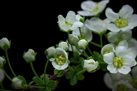Des fleurs qui poussent