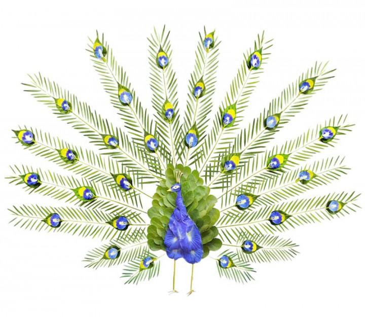 oiseau petale 02 720x625 Des oiseaux en pétales  divers bonus