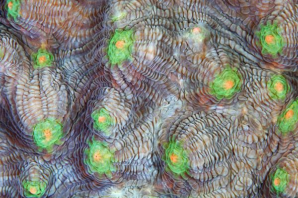 texture corai 02 La texture des coraux  technologie photographie bonus animaux technologie