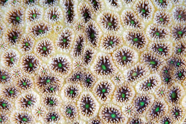 texture corai 10 La texture des coraux  technologie photographie bonus animaux technologie