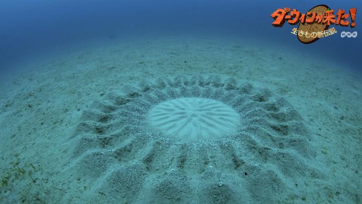 cercle 720x405 Les cercles dans le sable dun petit poisson  video technologie photo bonus animaux technologie