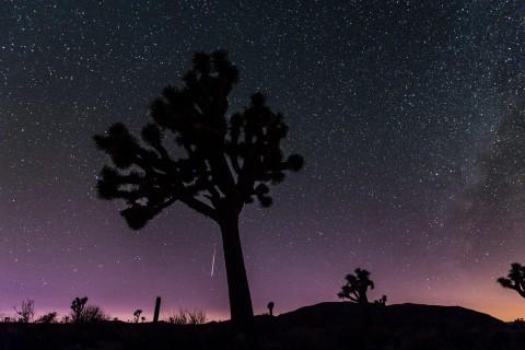 Les perséides vues du Parc national de Joshua Tree
