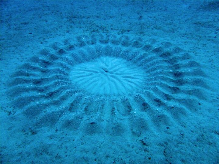 poisson 720x540 Les cercles dans le sable dun petit poisson  video technologie photo bonus animaux technologie
