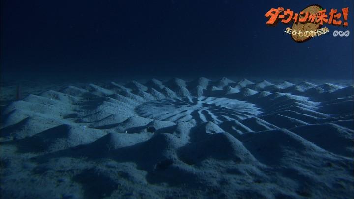 poisson cercle 720x405 Les cercles dans le sable dun petit poisson  video technologie photo bonus animaux technologie