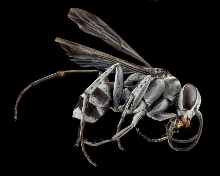Arthropode Macro 01 720x575 Des macros darthropodes aux détails incroyables  technologie photo photographie bonus animaux technologie