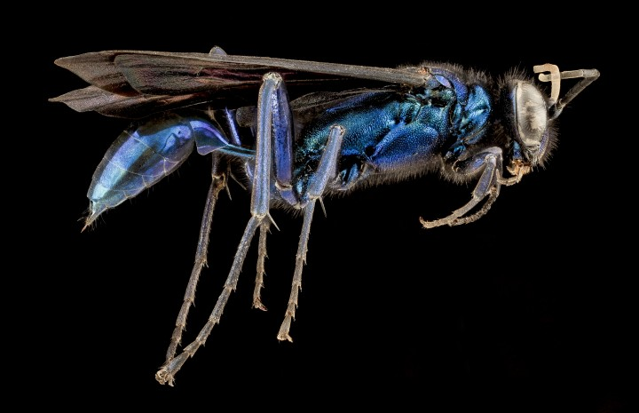 Arthropode Macro 04 720x465 Des macros darthropodes aux détails incroyables  technologie photo photographie bonus animaux technologie