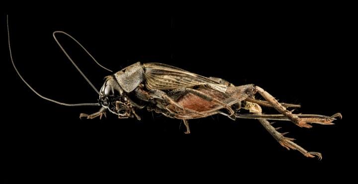 Arthropode Macro 05 720x370 Des macros darthropodes aux détails incroyables  technologie photo photographie bonus animaux technologie