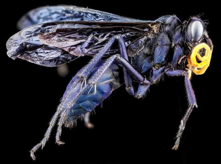 Arthropode Macro 09 720x535 Des macros darthropodes aux détails incroyables  technologie photo photographie bonus animaux technologie