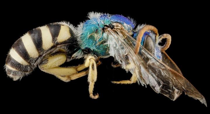 Arthropode Macro 11 720x392 Des macros darthropodes aux détails incroyables  technologie photo photographie bonus animaux technologie
