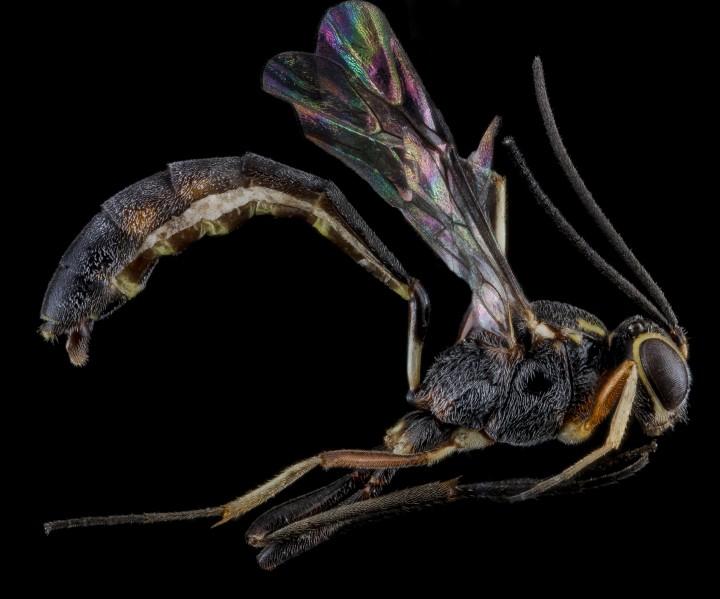 Arthropode Macro 16 720x599 Des macros darthropodes aux détails incroyables  technologie photo photographie bonus animaux technologie