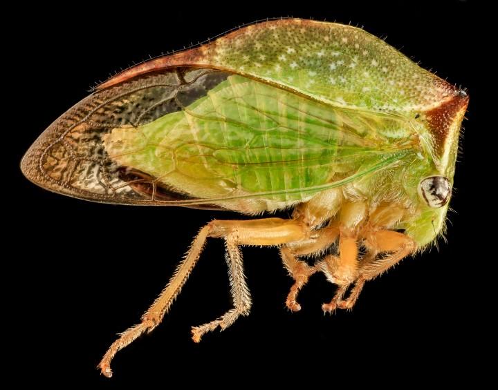 Arthropode Macro 18 720x565 Des macros darthropodes aux détails incroyables  technologie photo photographie bonus animaux technologie