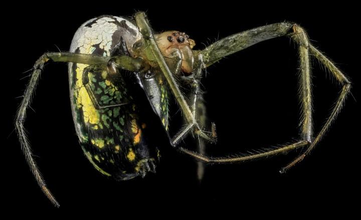 Arthropode Macro 25 720x439 Des macros darthropodes aux détails incroyables  technologie photo photographie bonus animaux technologie
