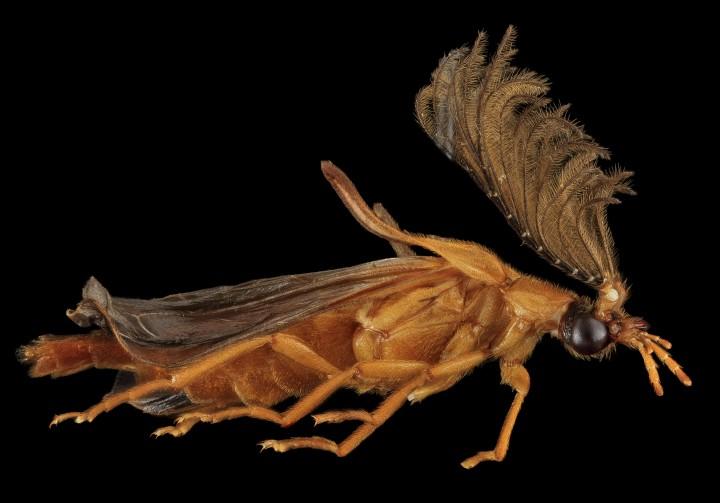 Arthropode Macro 27 720x503 Des macros darthropodes aux détails incroyables  technologie photo photographie bonus animaux technologie