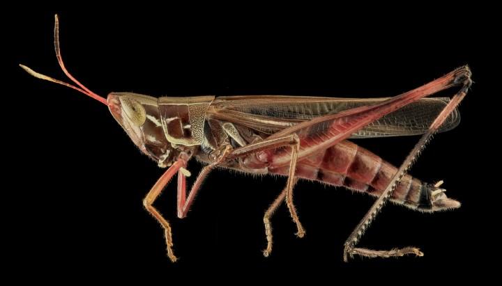 Arthropode Macro 30 720x411 Des macros darthropodes aux détails incroyables  technologie photo photographie bonus animaux technologie