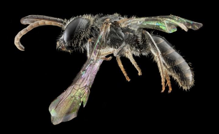 Arthropode Macro 32 720x442 Des macros darthropodes aux détails incroyables  technologie photo photographie bonus animaux technologie