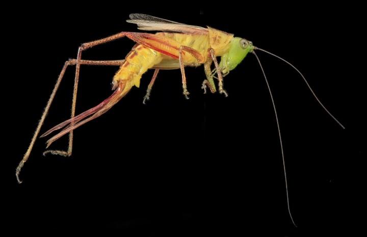 Arthropode Macro 34 720x466 Des macros darthropodes aux détails incroyables  technologie photo photographie bonus animaux technologie