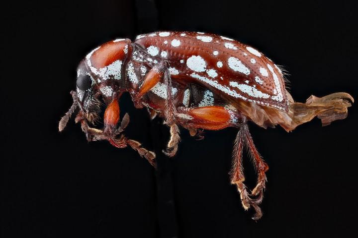 Arthropode Macro 35 720x480 Des macros darthropodes aux détails incroyables  technologie photo photographie bonus animaux technologie