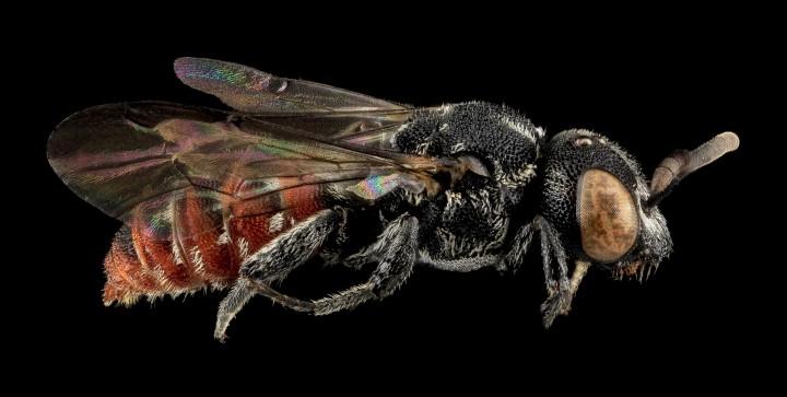 Arthropode Macro 36 720x363 Des macros darthropodes aux détails incroyables  technologie photo photographie bonus animaux technologie