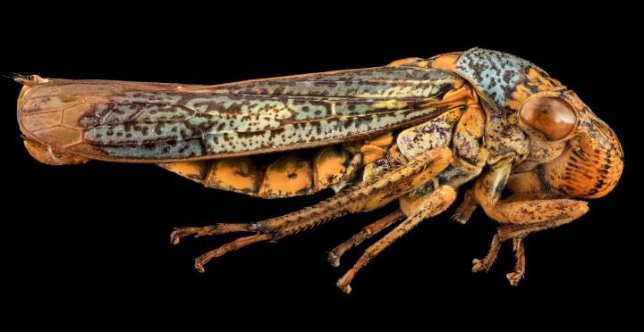 Arthropode Macro 38 720x372 Des macros darthropodes aux détails incroyables  technologie photo photographie bonus animaux technologie