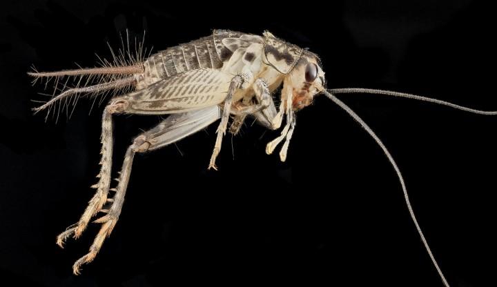 Arthropode Macro 39 720x416 Des macros darthropodes aux détails incroyables  technologie photo photographie bonus animaux technologie