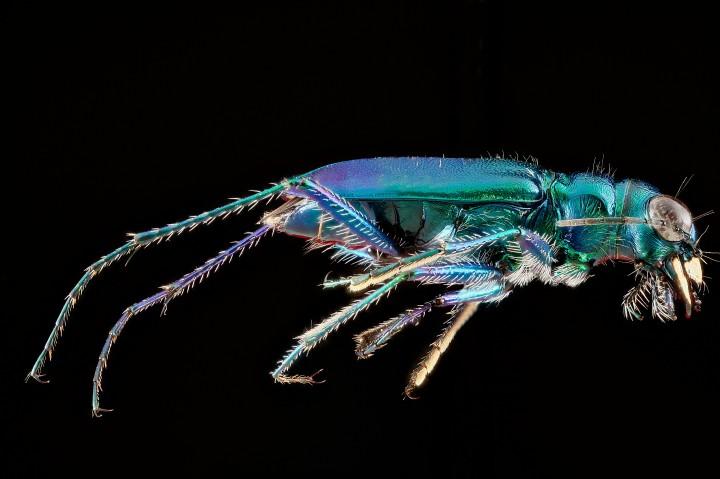 Arthropode Macro 40 720x479 Des macros darthropodes aux détails incroyables  technologie photo photographie bonus animaux technologie