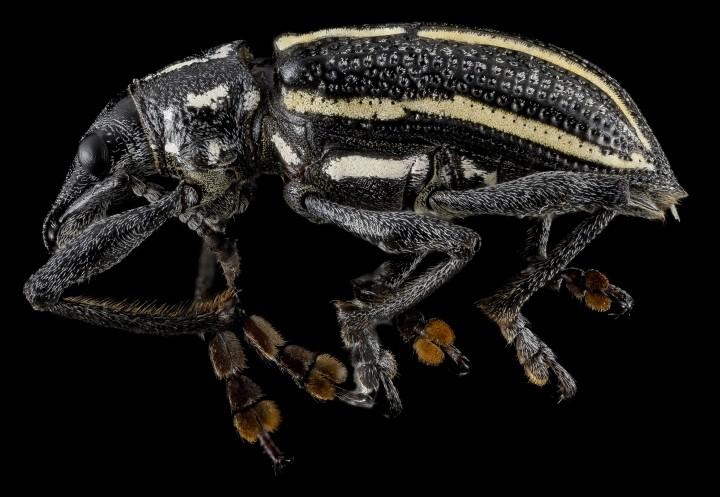 Arthropode Macro 45 720x497 Des macros darthropodes aux détails incroyables  technologie photo photographie bonus animaux technologie