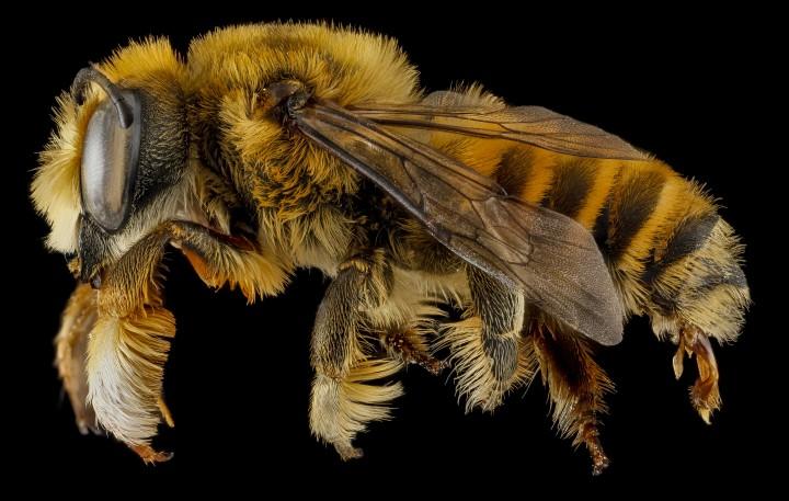 Arthropode Macro 46 720x457 Des macros darthropodes aux détails incroyables  technologie photo photographie bonus animaux technologie