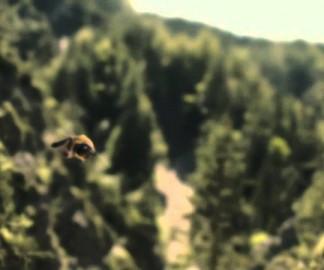 Une abeille qui s'envoie en l'air en l'air