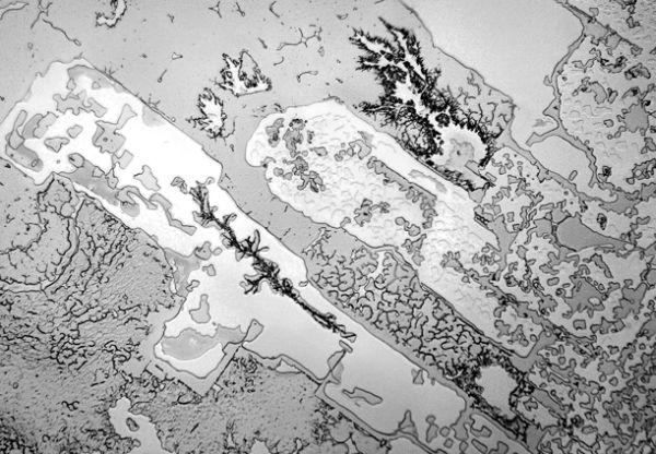 larme-microscope-01