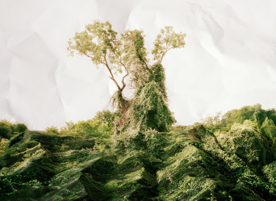 photo-arbre-froisse-01