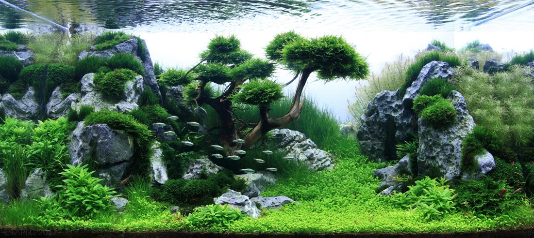 Des paysages d 39 aquariums - Stijl asiatique ...