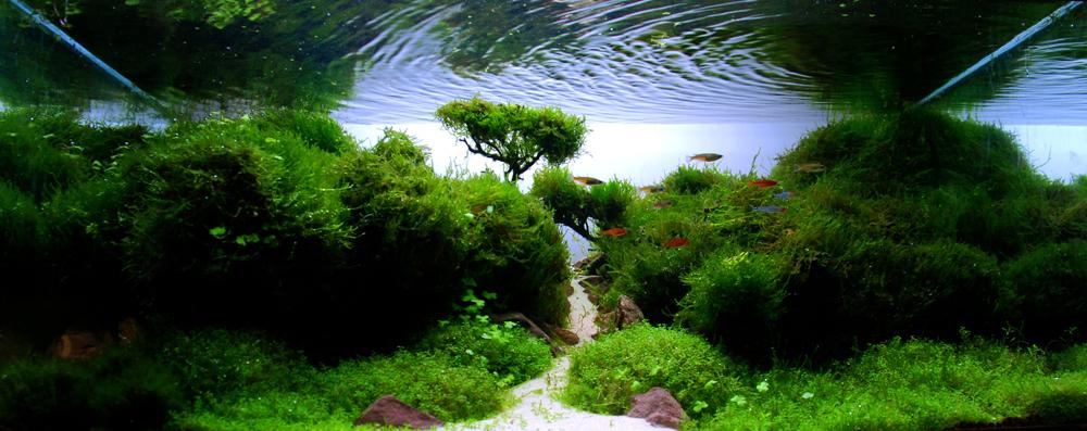 plante aquatique 06