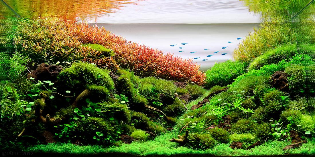 Tous les ans se tient l? AIPLC ( International Aquatic Plants Layout ...