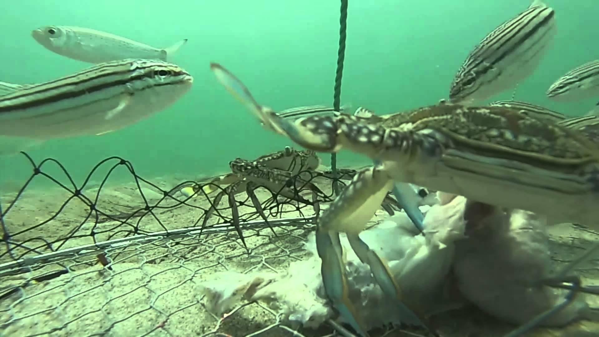 Dans un panier de crabe