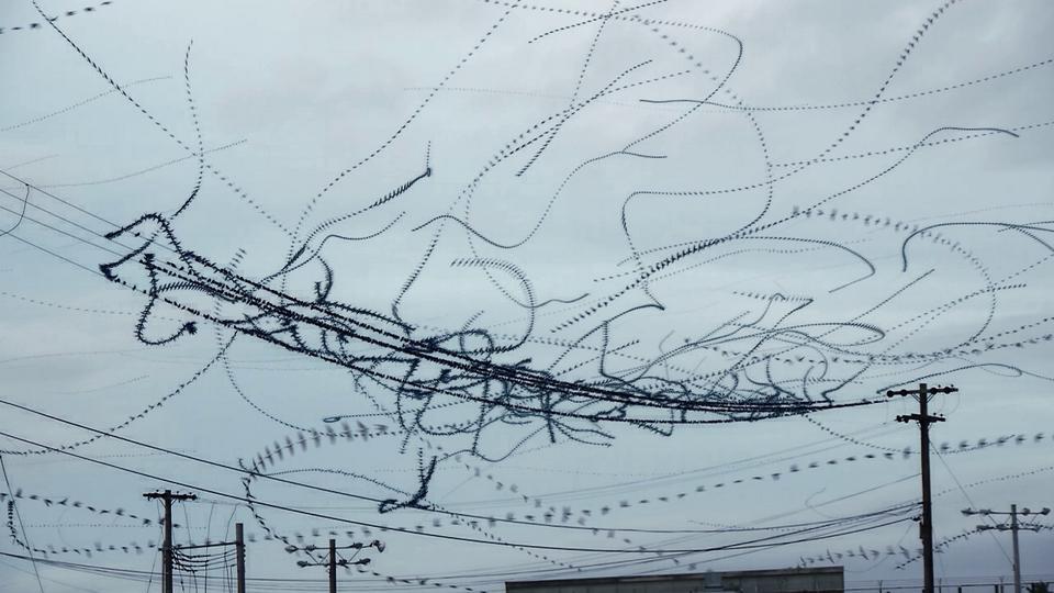 La trajectoire des oiseaux