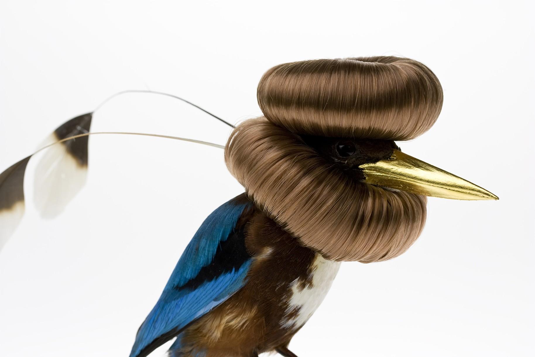 Des oiseaux augment s for Photo oiseau