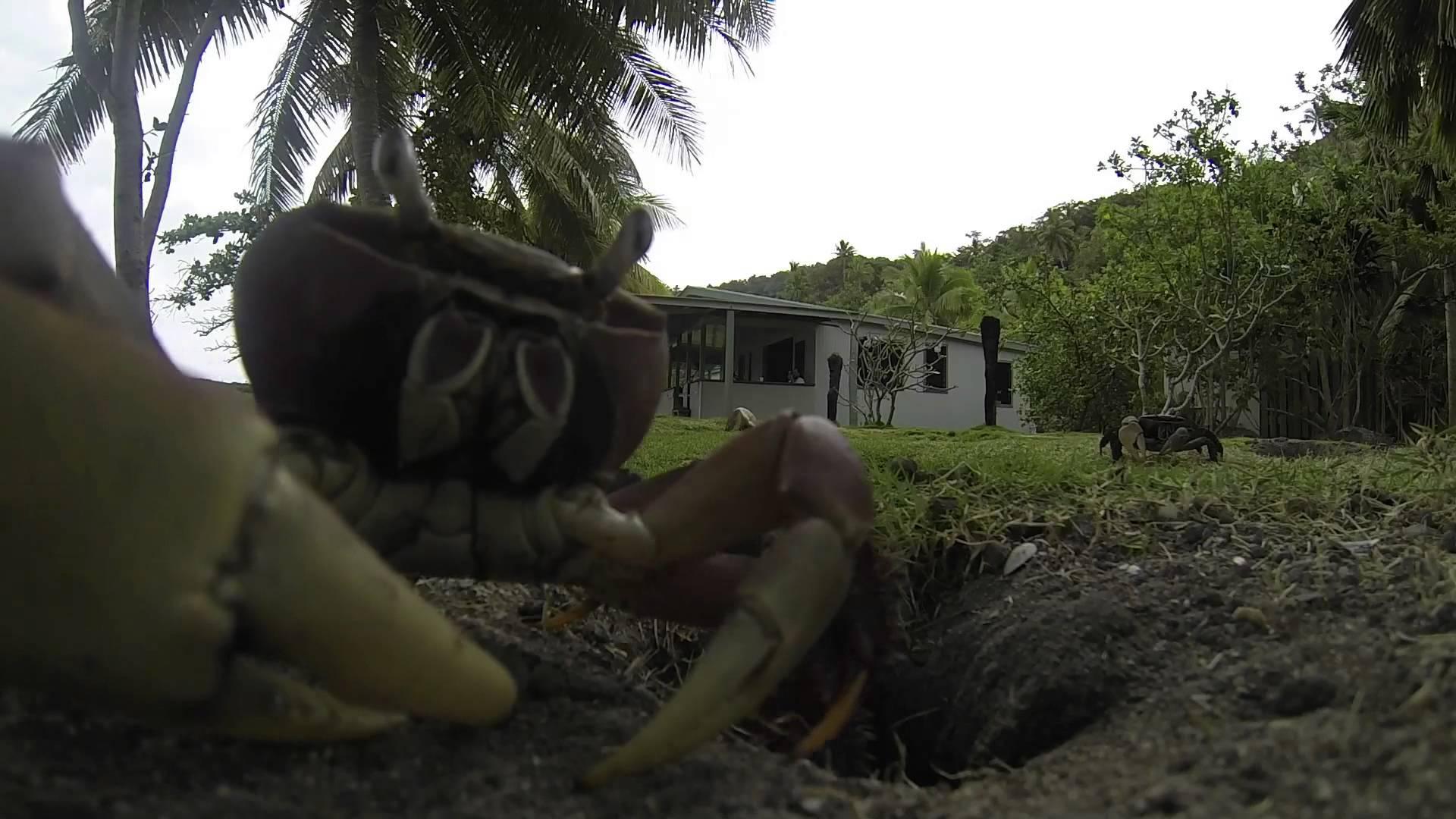 Un crabe qui vole une GoPro