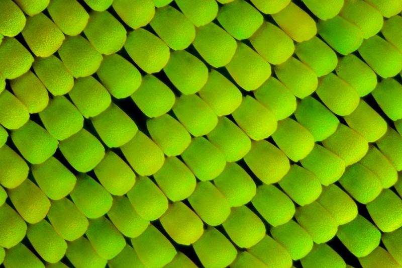 aile papillon 09 800x533 Des ailes de papillons vues de très près