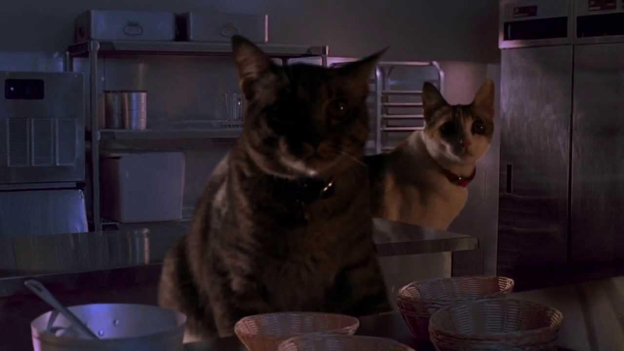 Des chats dans Jurassic Park