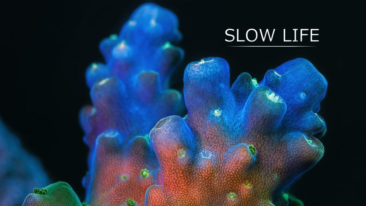 Du corail et des éponges en timelapse
