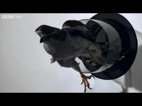 Un faucon qui vole dans des petits trous