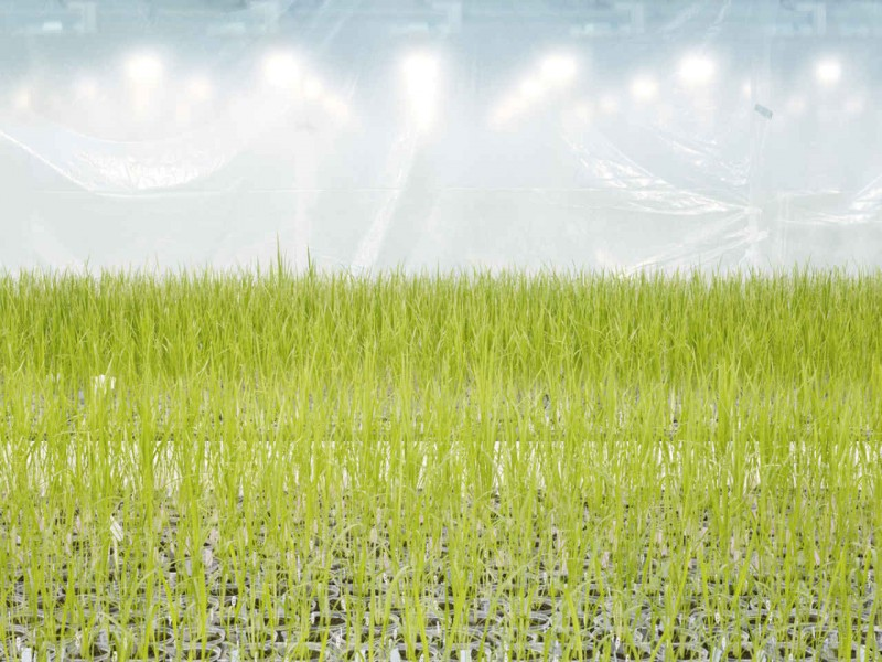 agriculture moderne 03 800x600 Lagriculture moderne