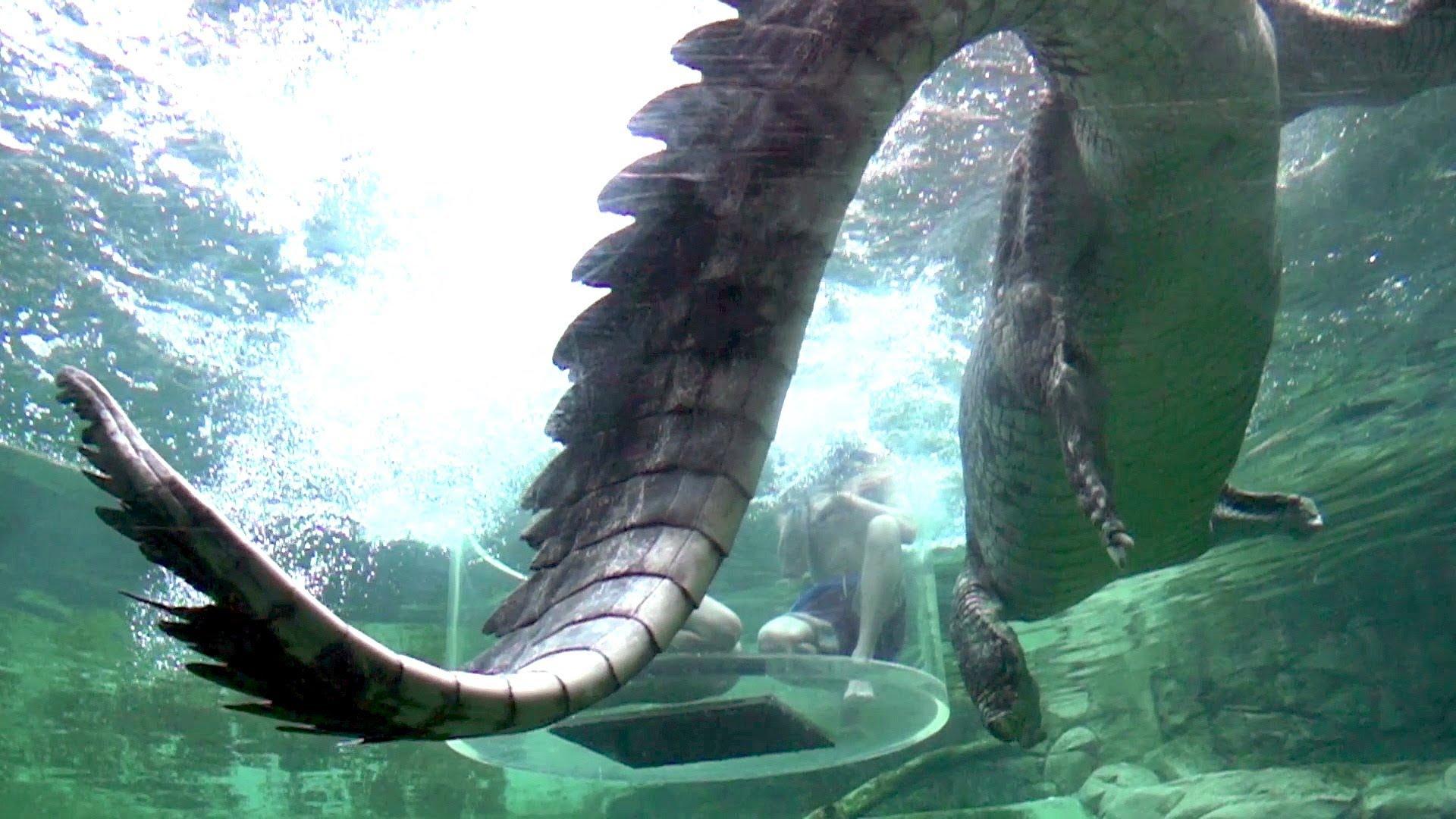 Des crocodiles qui sautent au ralenti