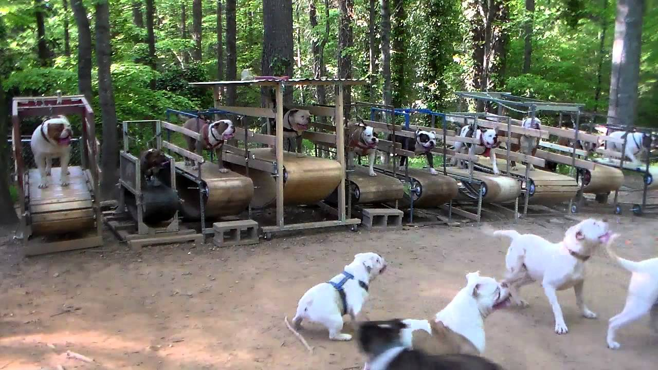 Des tapis roulants pour chiens