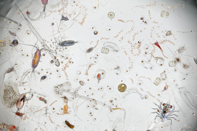Under a magnifier, a splash of seawater teems with life.