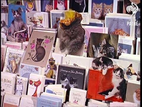 Un magasin d'accessoires pour chats en Angleterre – 1965