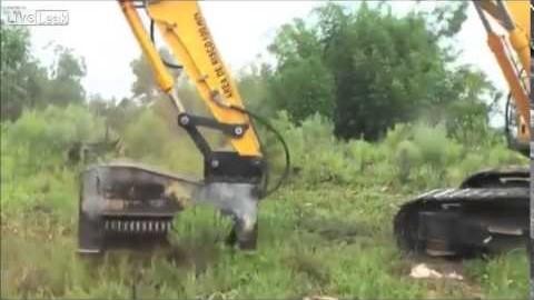 Comment effacer des arbres