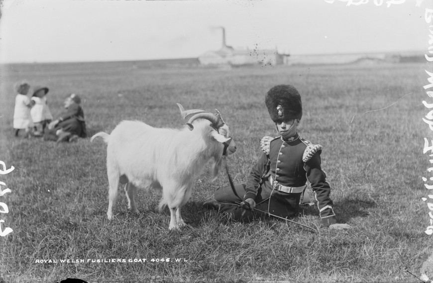 irlande-Royal Welsh Fusilier with the Regimental Goat 1887