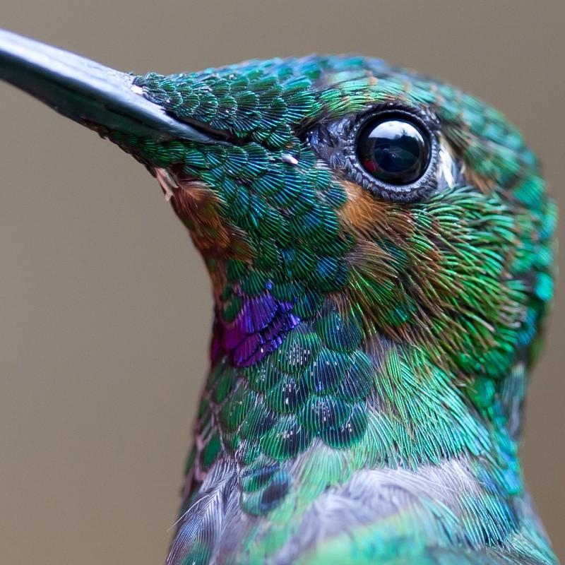 colibri-macro