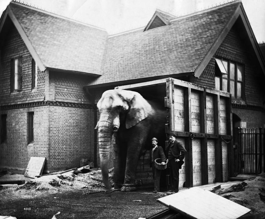 elephant-caisse